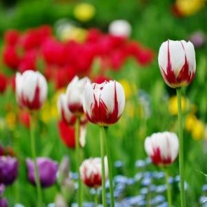 春のMaplelawn Garden