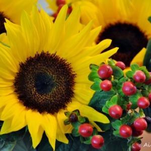 夏らしくヒマワリの花を♪