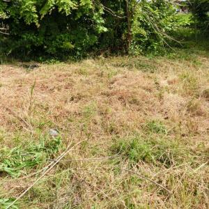 放置していた畑の草刈りなどをしています