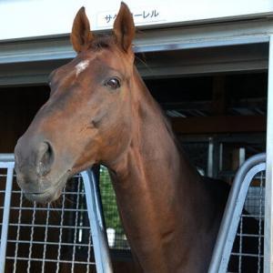 【競馬】訃報。G1種牡馬 サクラローレル号が死亡