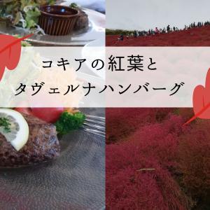 ひたち海浜公園の真っ赤なコキア絨毯と「タヴェルナハンバーグ」ランチ口コミ
