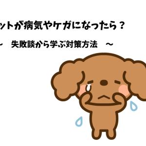 【体験談】愛犬が突然の怪我…!!夜間でも慌てない飼い主の対策方法はコレ!
