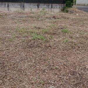 穴掘り 草刈りと続き