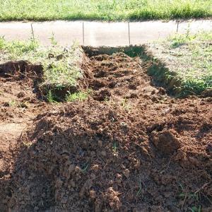 穴掘り 竹の根掘りの続き