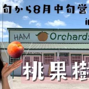 【Ham Orchards】5月中旬から8月中旬にやっている桃果樹園