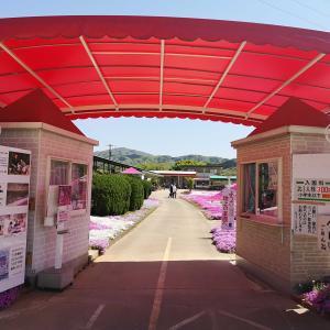 カフェ ジャルダン 芝桜2021(高松市西植田町)