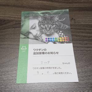 猫の日に届いたラブレター☆