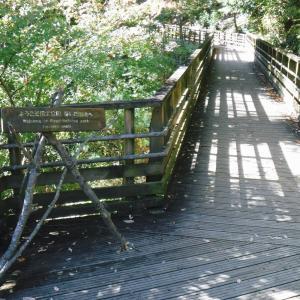 紅葉の色付き始めたほしだ園地 星のブランコでハイキングと景色を楽しむ