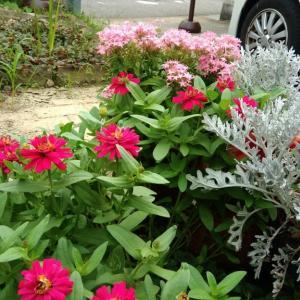無料が生える庭