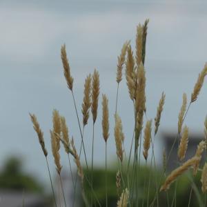 田んぼの畦は花盛り