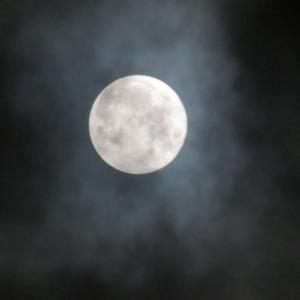 お月見できましたか