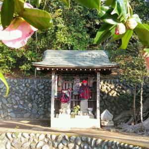 """▽・ェ・▽ノ"""" 椿と梅と杏の花の週詣り♪"""