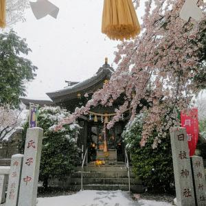 桜と雪の週詣り V◕ฺω◕ฺV