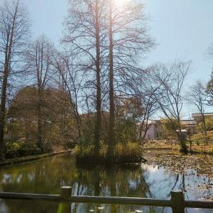 住吉神社と春咲き野花たち♪【片倉城跡公園②】