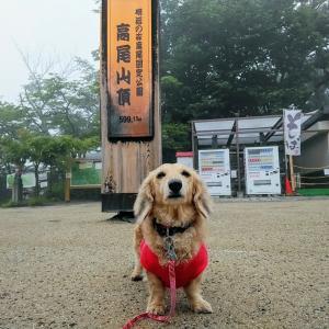 2020/6/14 小雨決行!高尾山ダイジェスト