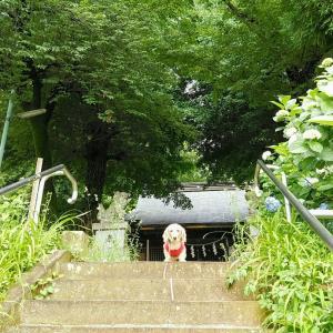桃の神さまが祀られる【関戸熊野神社】