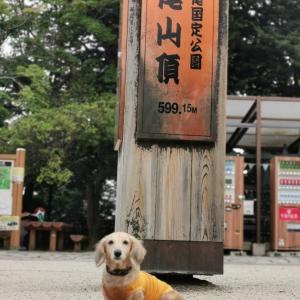 6号路〜山頂と霞んでた富士山に光明も!【高尾山2020 夏参拝①】