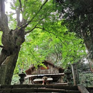 本丸から広がる絶景と野花たち【八王子城跡③】