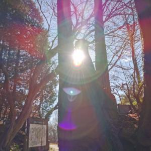 2020感謝を込めて~釜山神社テクテク動画▼・ᴥ・▼