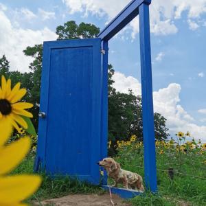 青空の扉を開けて〜向日葵とハロちん♪!【昭和記念公園②】