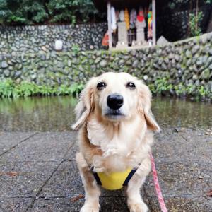 おすまし顔のハロちん♬〜中野山王子安神社