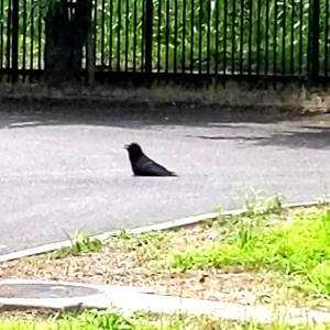カラスが羽を広げて佇んでいました