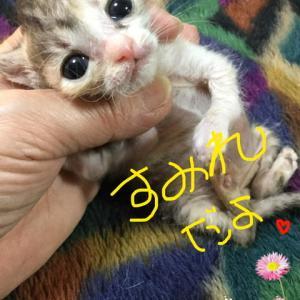 極小子猫のすみれちゃん