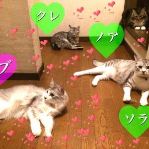 我が家のアイドル4兄妹ツブちゃんズ、お誕生日おめでとう〜