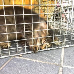 レオの家猫訓練