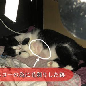 飼い猫キュウちゃんの体調不良その後 & 最近のレオ(譲渡会のお知らせあり)