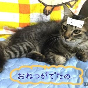 保護猫レオくんの回復 & おにぎりとのりまきコンビ+最近のおチビちゃん達
