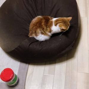 【無印ソファー】 ダメ猫ソファー