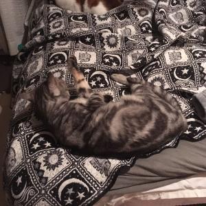 【寝る場所】ベッド