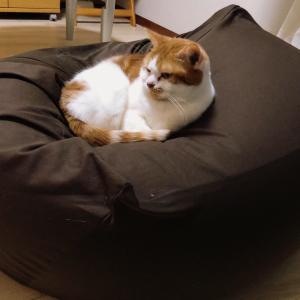 【猫じゃらし】モコモコにょろりん  2号で