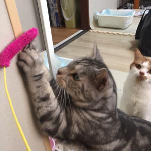 【モコモコにょろりん】遊ぶ猫