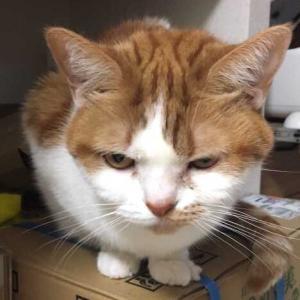 【猫トイレ】ニオイをとる砂
