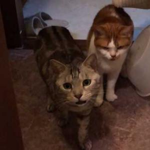 【All Well】 避妊・去勢した猫の体重ケア
