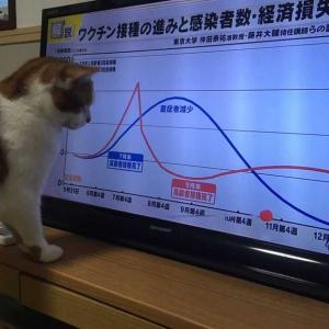【テレビ】2号のワイドショー