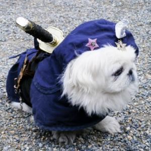 「里見八犬伝」あらすじと感想【ネタバレあり】