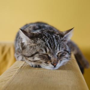 適切な睡眠時間をとれない人へ睡眠の分割のススメ