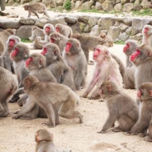 お猿でもわかる!相場環境の読み方