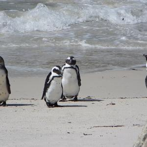 南アフリカ・ケープタウンをとことん楽しむ方法(BazBus観光編)