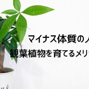 観葉植物『パキラ』を置くことでマイナス体質の人にどんなメリットがあるの?