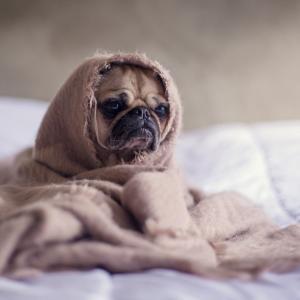 犬を毎日お風呂に入れても大丈夫なの?【基本は気になったら入れるです】