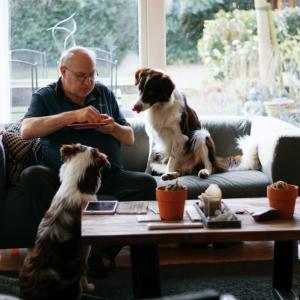 犬がソファで穴を掘るしぐさの理由【無理にやめさせる必要はない】