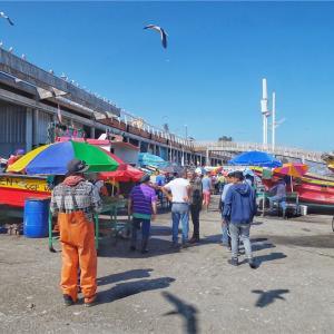 チリの魚市場、絶品生貝