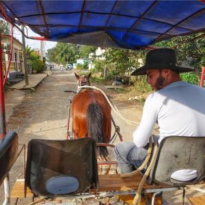 Viñales/ヴィニャーレス 乗馬ツアー ホースライディング