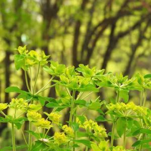 路傍の花  6