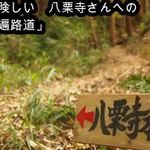 第51話 「八栗寺へ向かう もう一つの険しい遍路道(🔶小さな修行)」🔺youtube動画