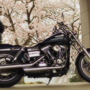 奥琵琶湖お花見ツーリングその1 マキノサニービーチ〜海津大崎の桜